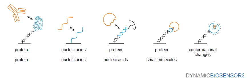 Etude des interactions moléculaires en temps réel (Dynamic Biosensors)